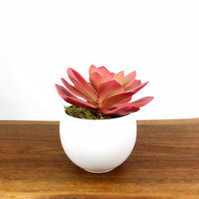 Load image into Gallery viewer, Pink Echeveria w/Luna Pot