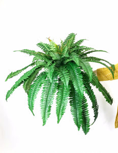 "Boston Fern 24""L Frond"