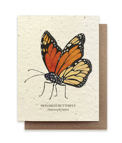 Monarch Butterfly Seed Card