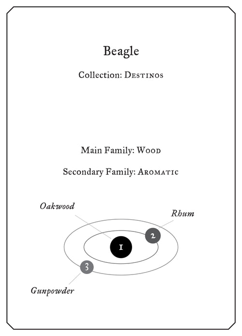 Beagle - Sample