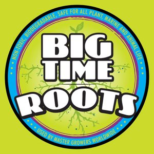 Big Time Roots