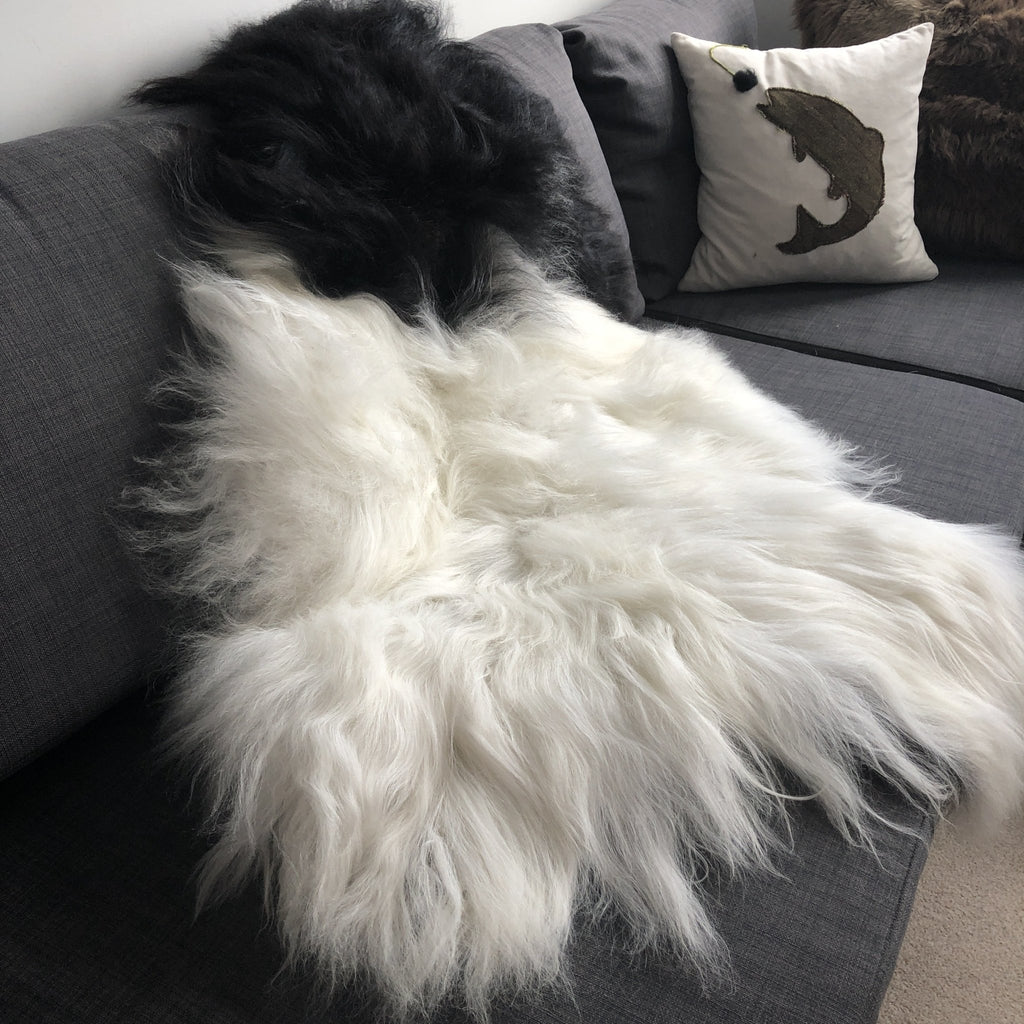 Large Spotted Yin & Yang Icelandic Sheepskin Throw White with Black Spots Sheep Skin Rug Eco Fleece 100% Natural Undyed Hygge UN-2008 - Wildash London