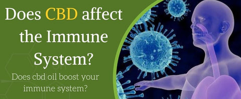 CBD Oil and Your Immune System