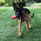 Firecracker Rubber Dog Toy and Floating Dog Toy