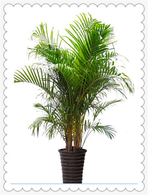 High Quality Home decoration Size Palm Tree Artificial Plants