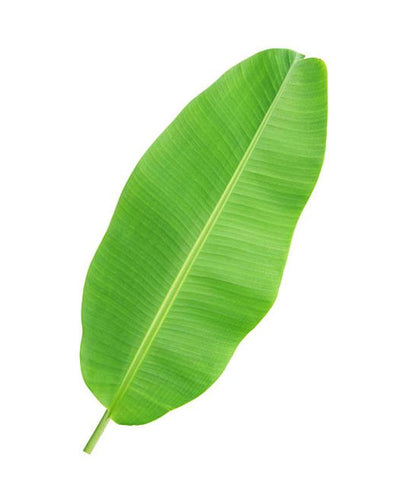 Banana Leaves (Vaazhai Ilai) 3 Pieces