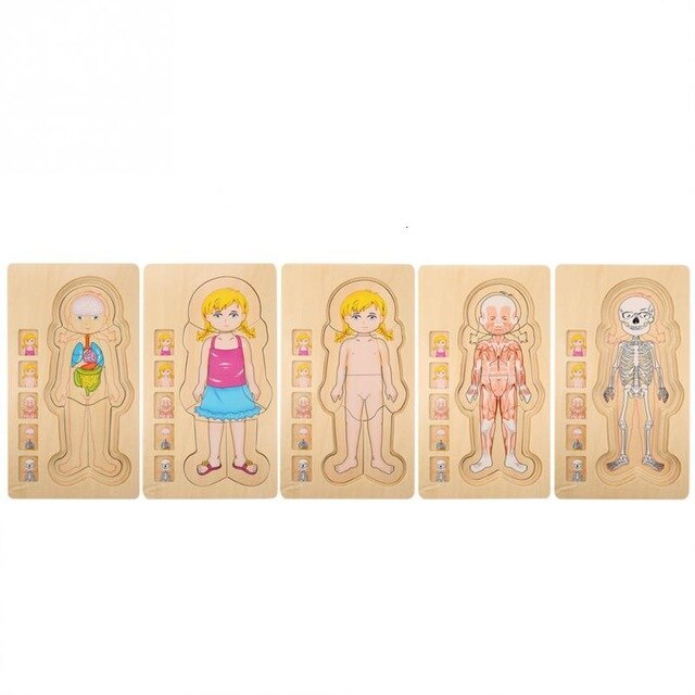 Childrens   Puzzle Human Body Structure  for Learning Cognition