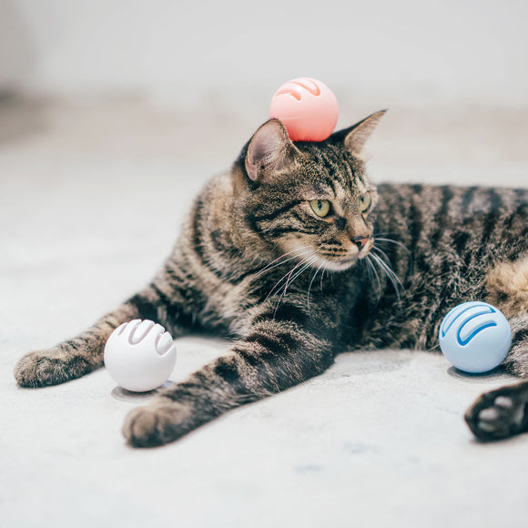 PIDAN Cat Toy Ball (Bell or Catnip)