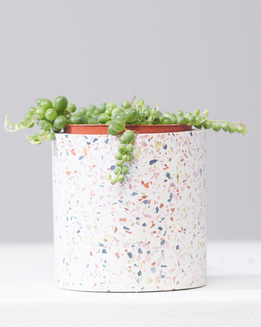 "STRING OF PEARLS 4"" Grower Pot"