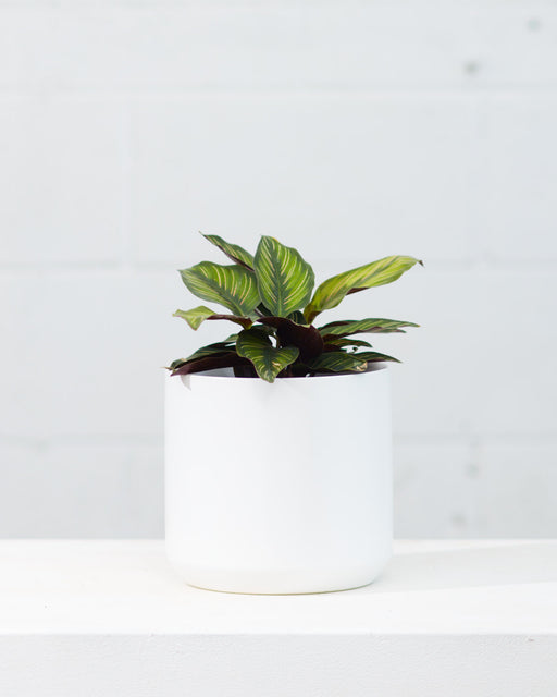 KENDALL WHITE PLANTER Small 6.75 Inch