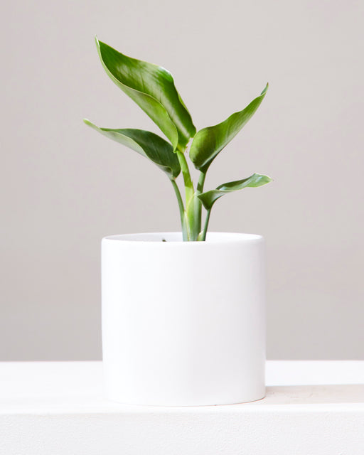 CERCLE PLANTER Matte White, Small 6.5 Inch