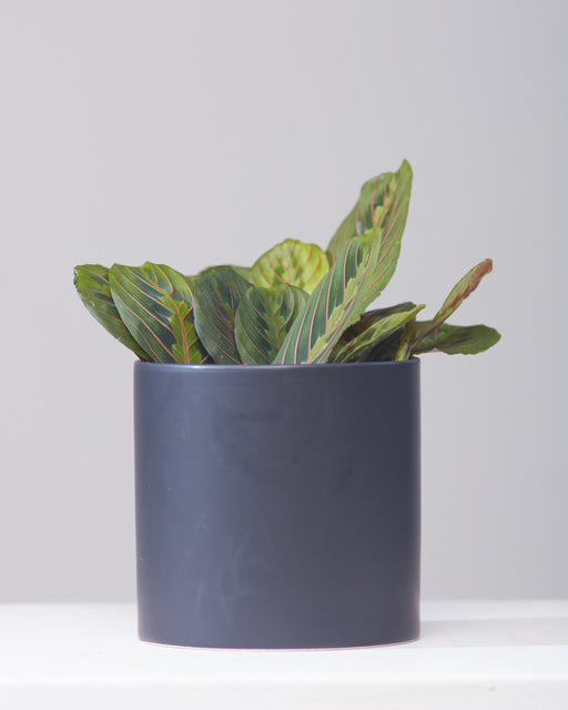 CERCLE PLANTER Matte Black, Small 6.5 Inch