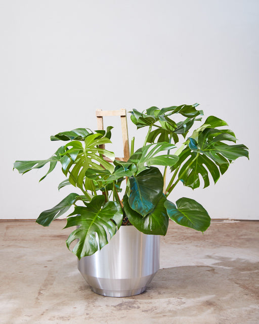"MONSTERA TRELLIS 12"" Grower Pot *1 ONLY*"
