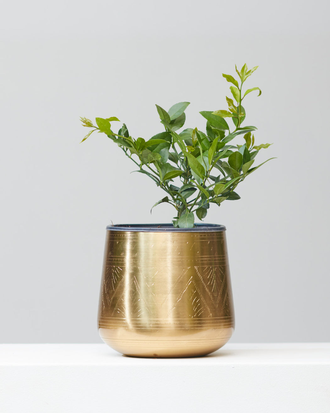 "MEYER LEMON 7"" Grower Pot"