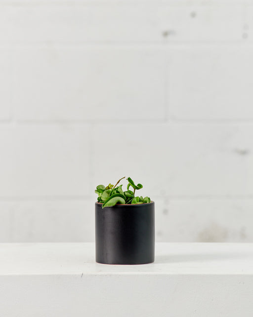 CERCLE PLANTER Matte Black, Small 4.25 Inch