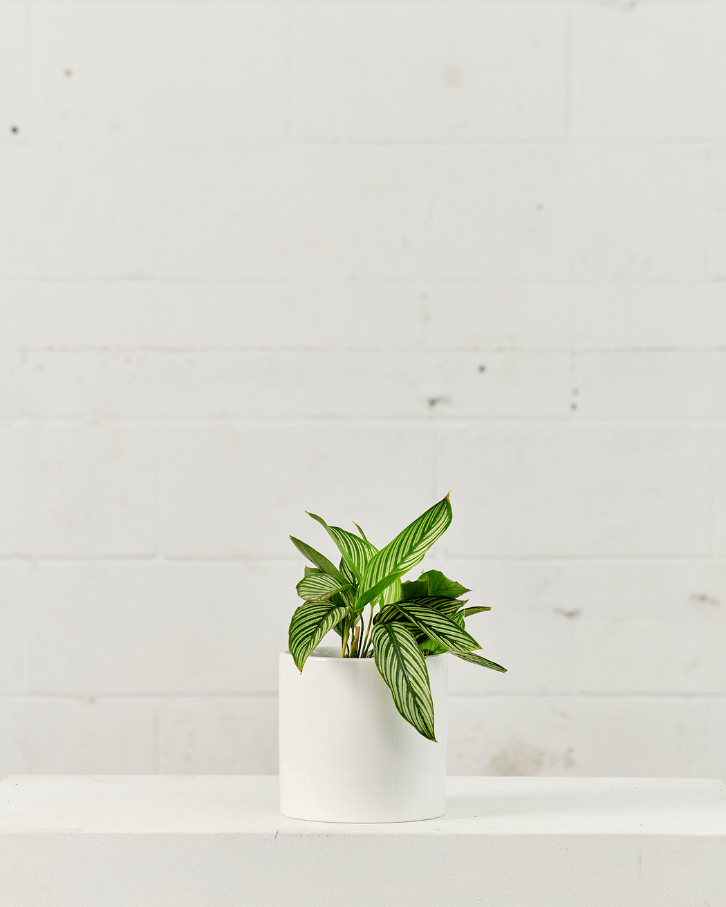 CERCLE PLANTER Gloss White, Small 6.5 Inch