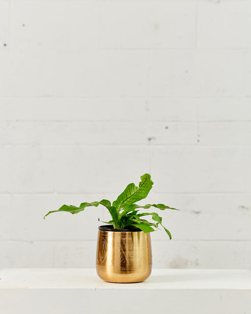 TULUM PLANTER Small 6 Inch