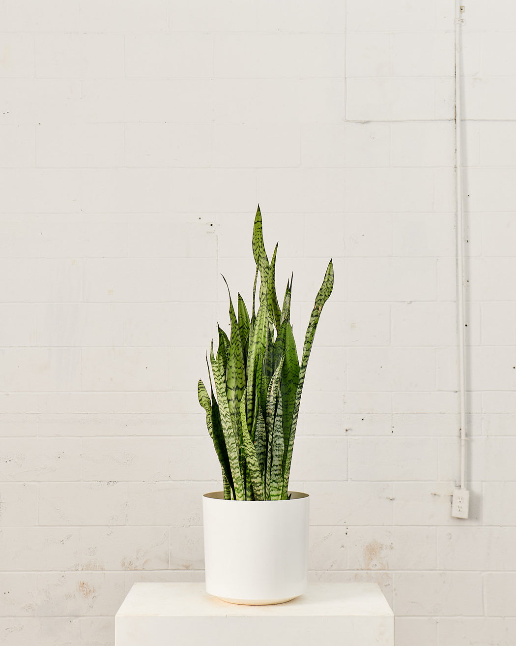 ATLAS PLANTER (WHITE) Medium 12 Inch