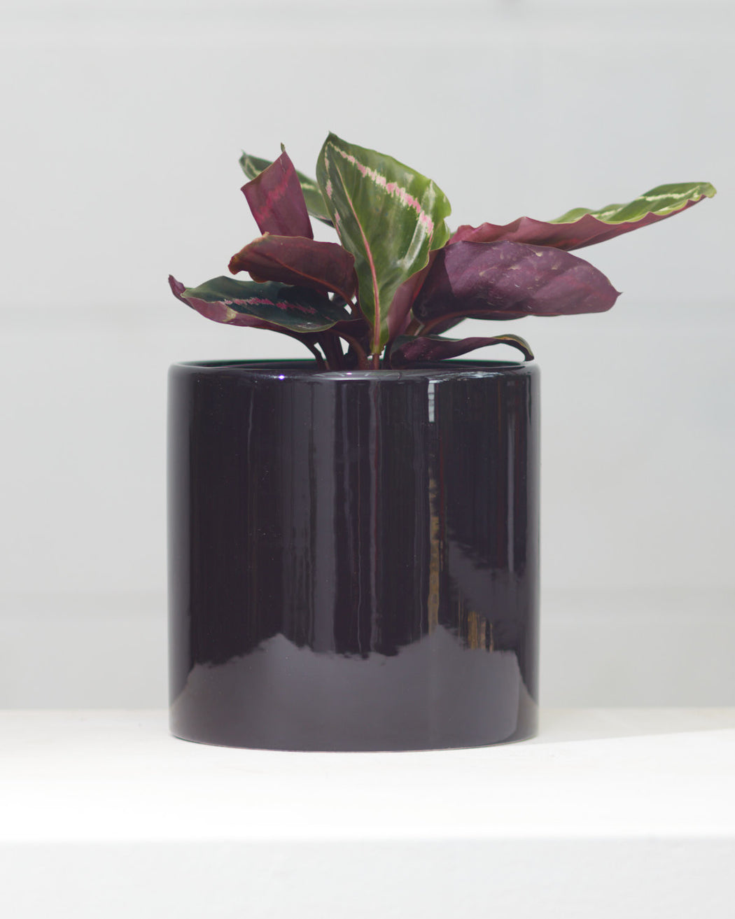 CERCLE PLANTER Gloss Black, Small 6.5 Inch