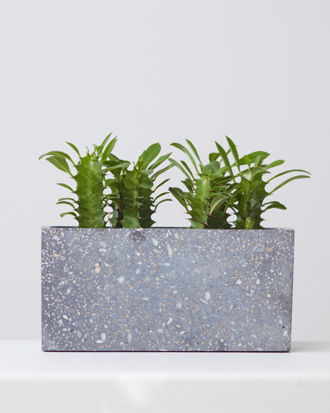 GREYSTONE PLANTER, Small 8.5 X 4.25 Inch (4 Inches deep)