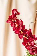 Load image into Gallery viewer, Cymbidium Orchids