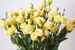Load image into Gallery viewer, Yellow Lisianthus