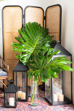 Load image into Gallery viewer, Monstera Leaves