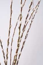 Load image into Gallery viewer, Pussy Willow Branches