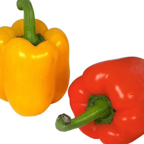 Bell Pepper - Each - SW Coast Refills