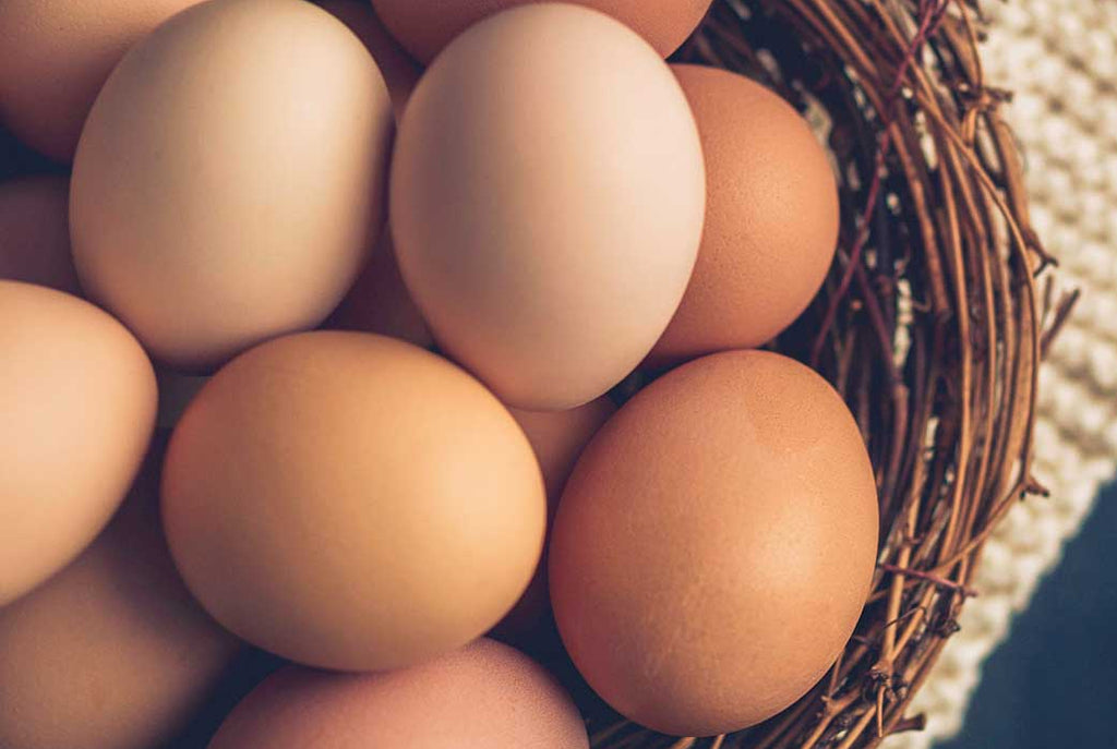 Why Are Organic Eggs Better?