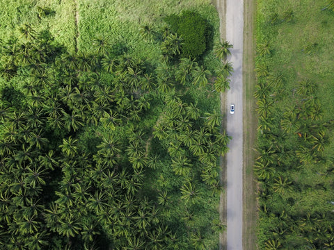 An aerial shot of a straight single-track road cutting through the rainforest