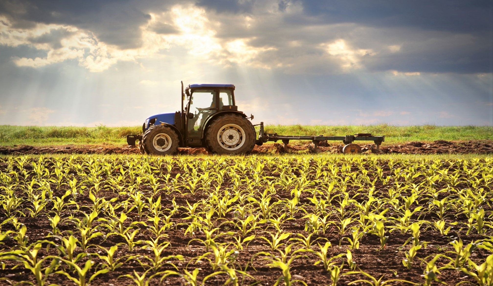 large tractor ploughing corn field as sunset approaches