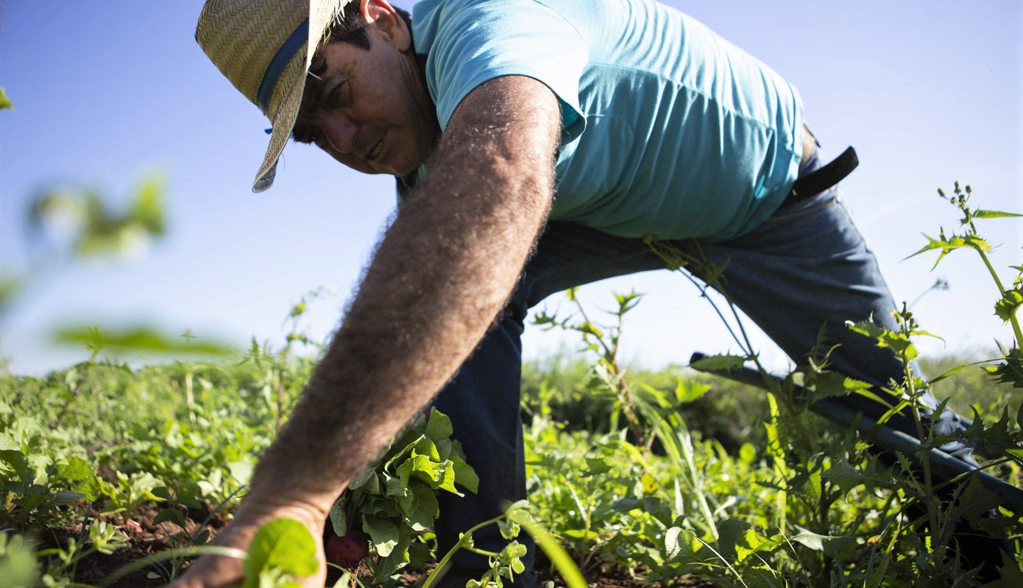 farmer working in field with hat on and sun on his back