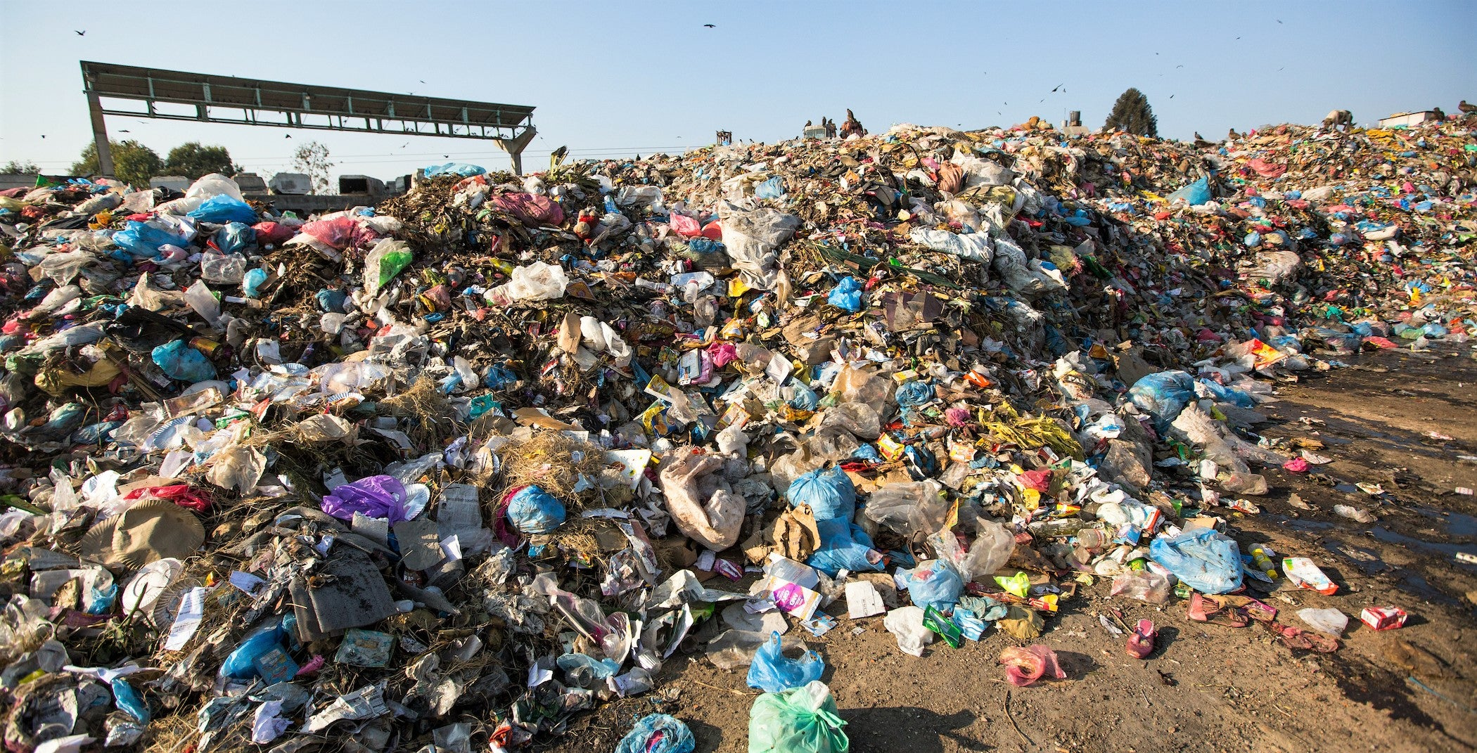 landfill site full of discarded food and swarming with seagulls