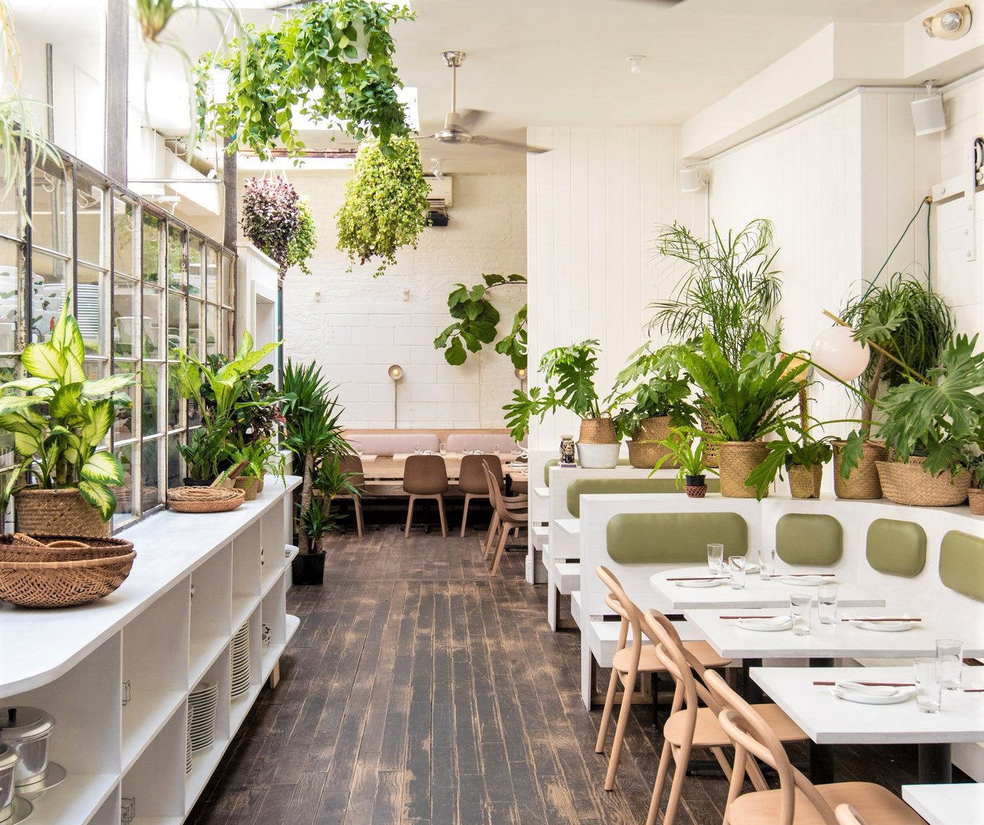 restaurant filled with sunlight and wide array of potted green plants
