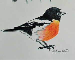 Drawing - Robin Redbreast - Outback Creative Gifts
