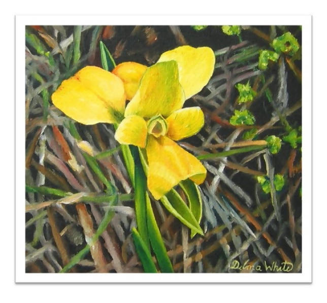 Fine art print - Little Bee - Outback Creative Gifts