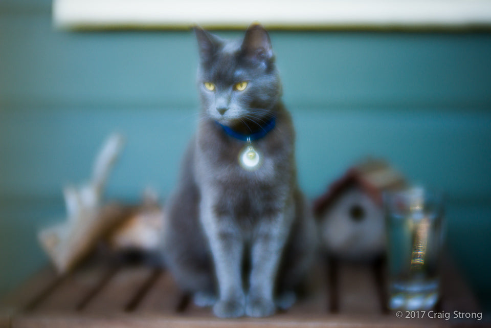 photo by Craig Strong still life with cat shot with Lensbaby Velvet 85 at F/1.8