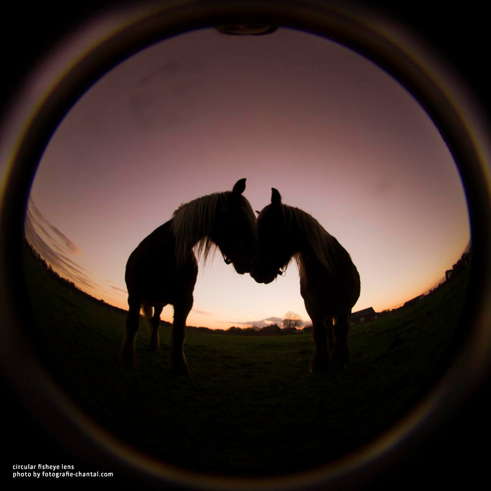 silhouette of two horses sunset red sky Lensbaby University Circular Fisheye Introduction