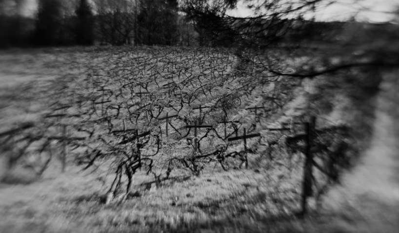 vineyard orchard during winter rows of plants black and white lensbaby featured photos