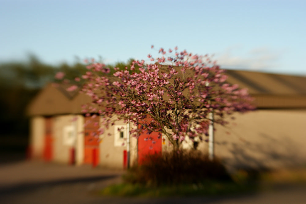 Blossoming tree in front of houses with red doors Lensbaby Creators Janet Broughton