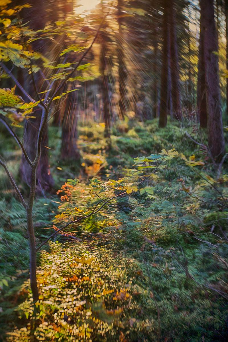 Fall autumn leaves foliage forest sun and shadows featured photos