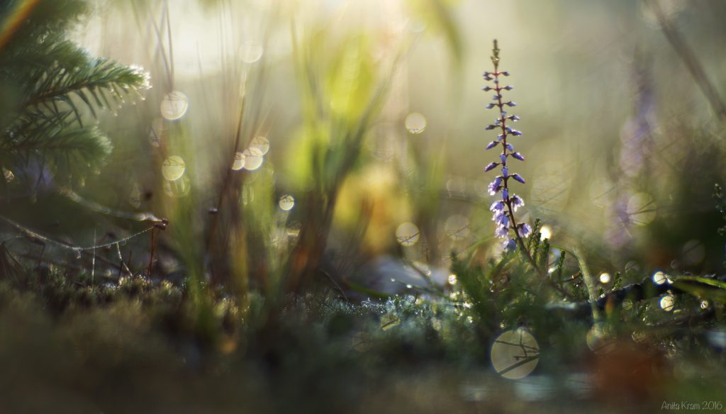 Anita Kram with Composer Pro and Edge 80 Optic Lensbaby Creative Photography Macro Photography Nature Photography