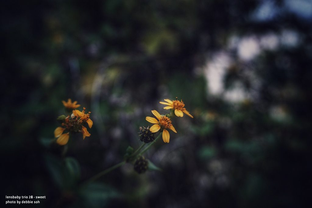 yellow flowers Debbie Soh with Trio 28 Lensbaby Creative Photography