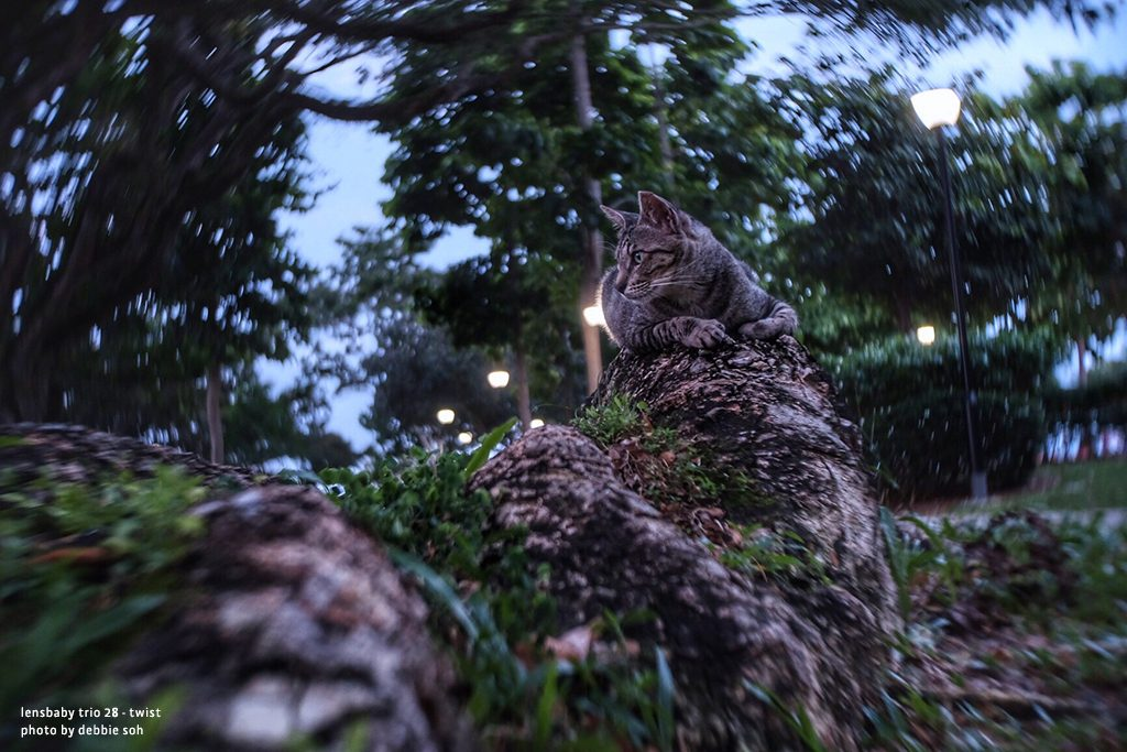 cat ready to jump at dusk Debbie Soh Trio 28 Lensbaby Creative Photography