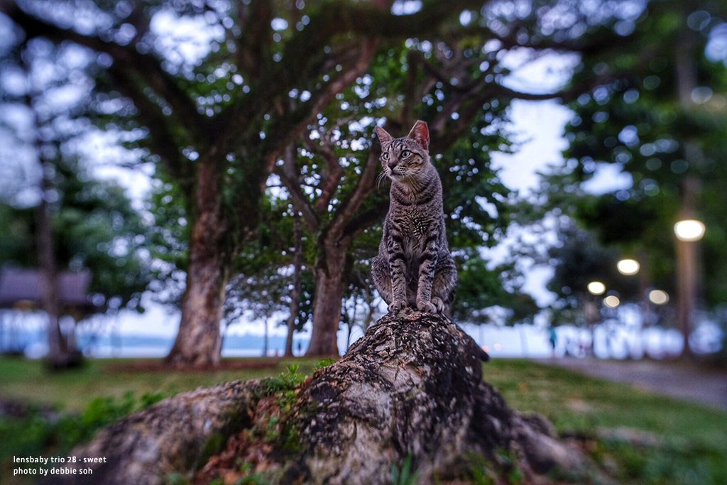 Gray and black Cat on tree branch in trees Debbie Soh Trio 28 Lensbaby Creative Photography