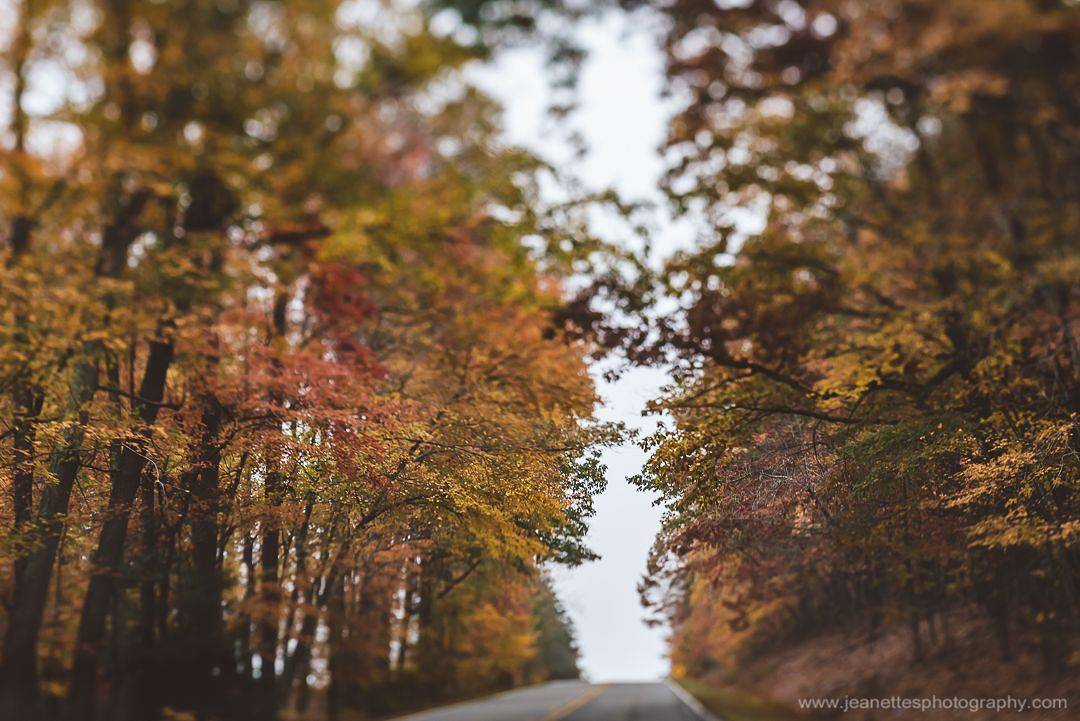 fall autumn leaves trees road drive yellow leaves featured photos lensbaby