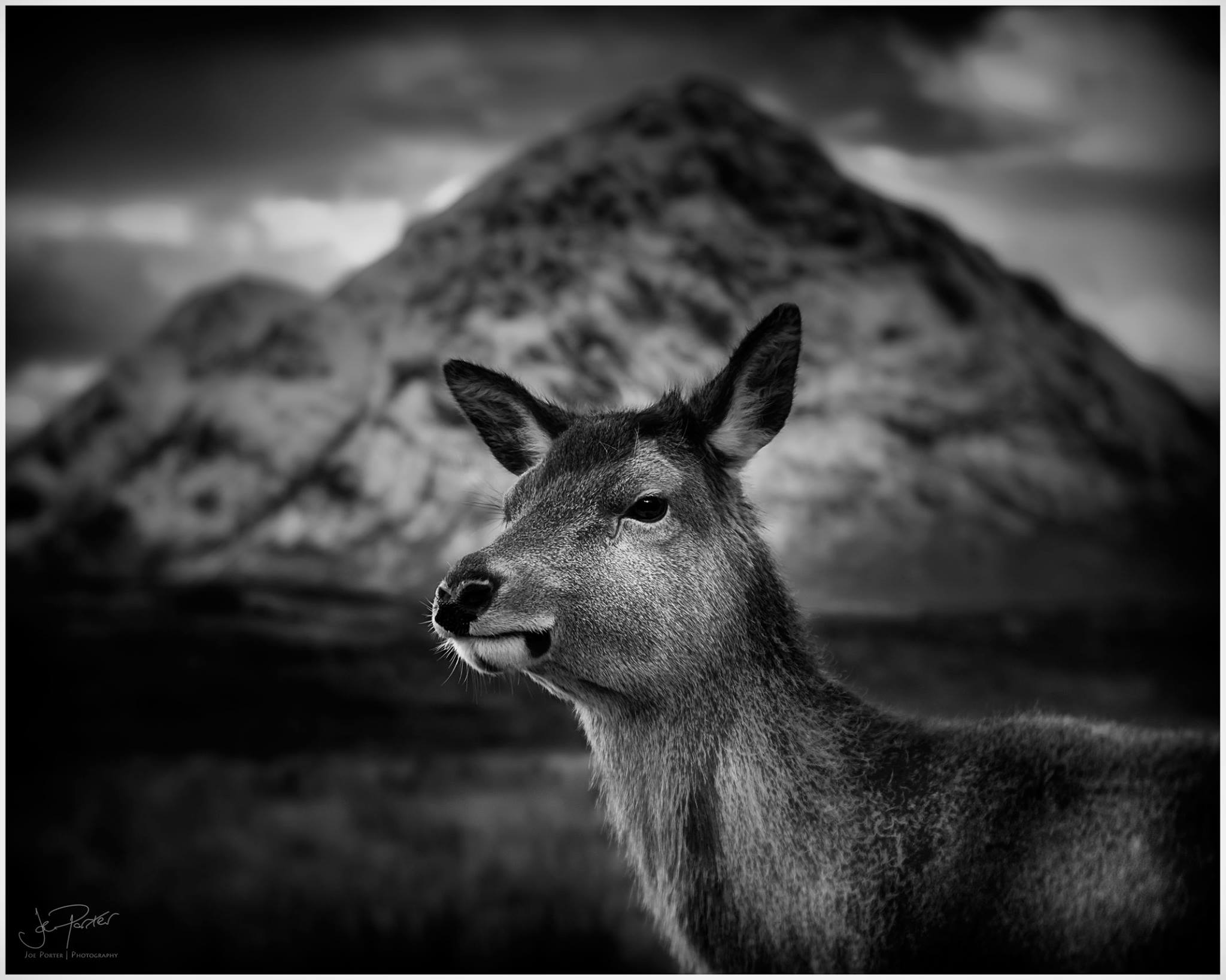 deer in front of mountain black and white photo Lensbaby's featured photos