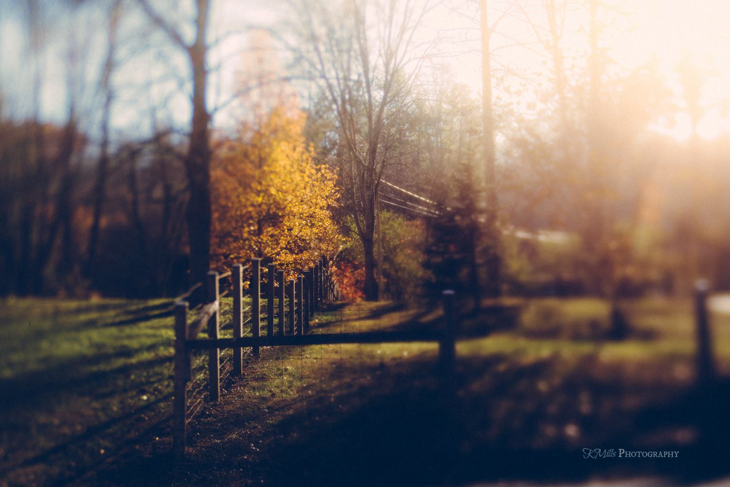 fall foliage autumn leaves selective focus yellow tree featured photos of the week