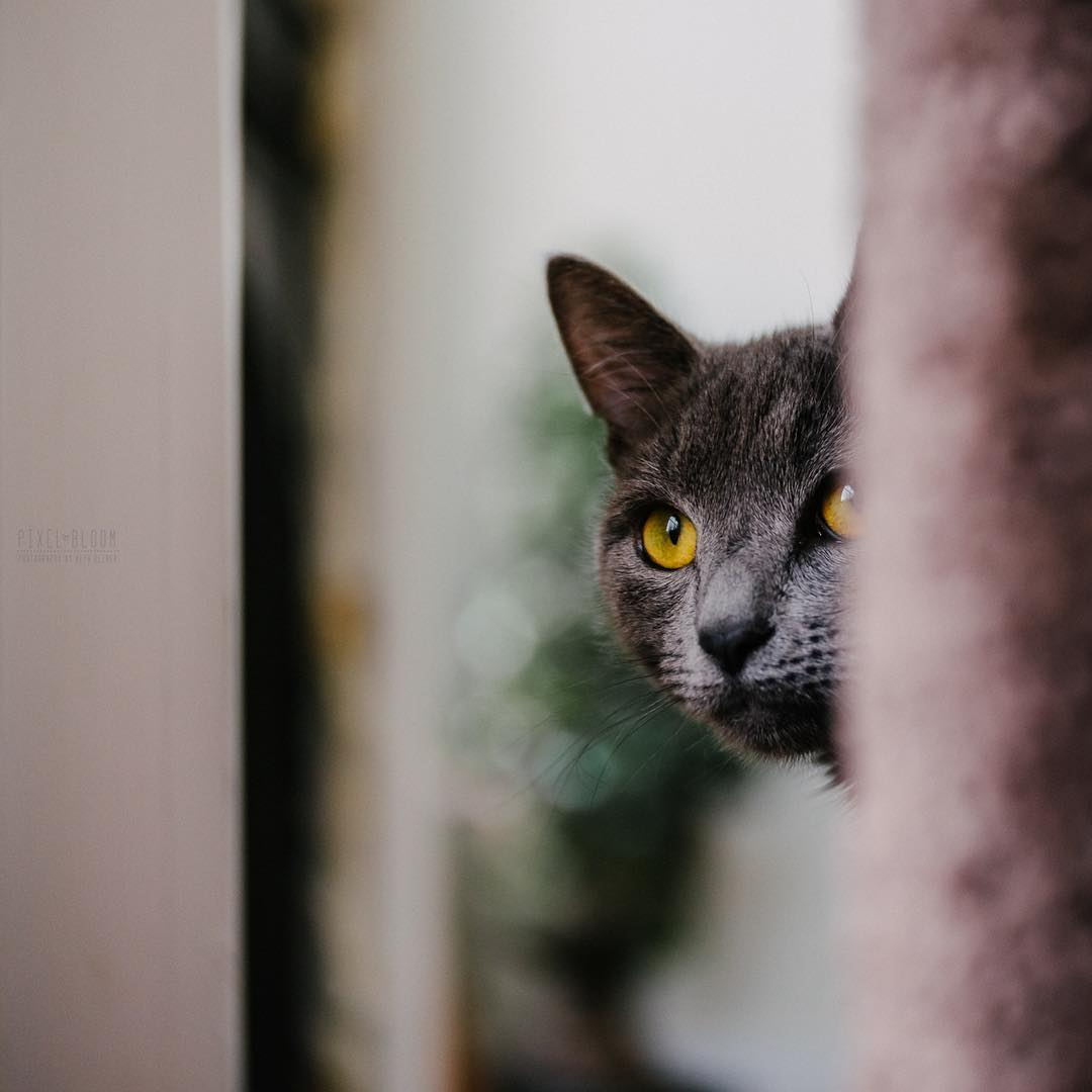 Cat with golden yellow eyes cat head bokeh selective focus Lensbaby featured photos velvet 56